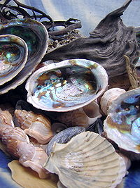 200px-Seashells_by_designerd_cc-by-sa-2_0